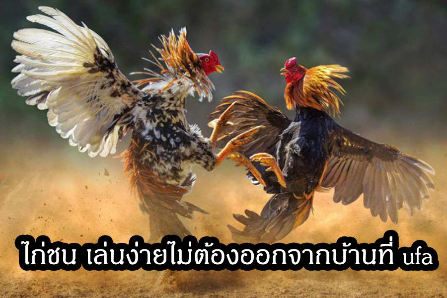 ไก่ชน ufa